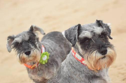 Bella & Mabel